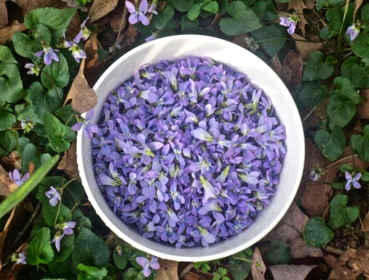 violet blossoms
