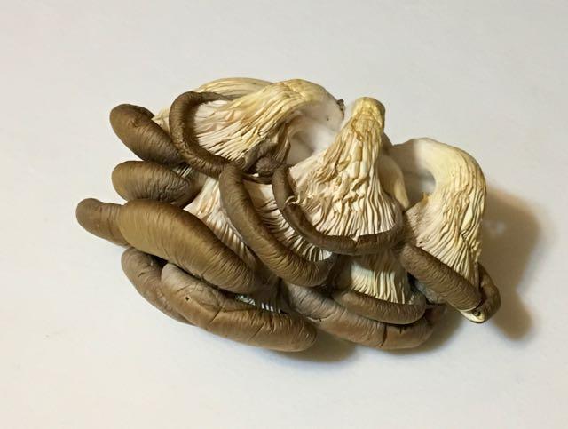 parsnip leek mushroom pie