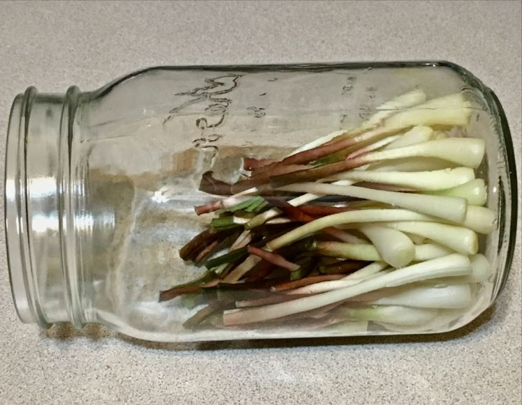 ramps bulbs