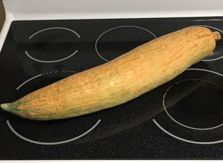 Georgia candy roaster squash