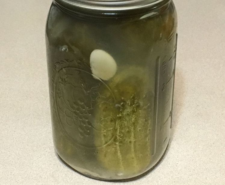 fermented cucumber pickles.jpg