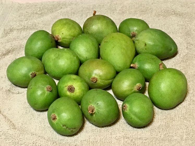baby mangoes