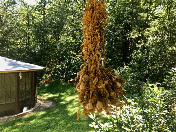garlic (18).jpg