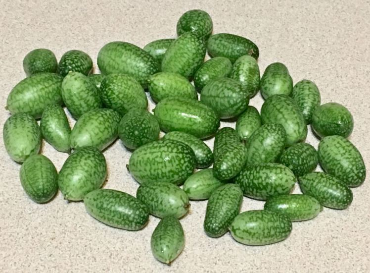 Mexican Sour Gherkins